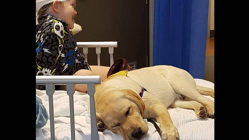 Tres niños autistas no pueden entrar con su perro de asistencia en un camping