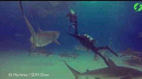 Un buceador se enfrenta a un tiburón tigre para salvar a su alumno