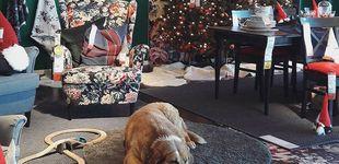 Post de Una tienda de Ikea en Italia abre sus puertas a los perros abandonados
