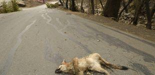 Post de Donald Trump reautoriza el uso de 'bombas de cianuro' para matar animales salvajes