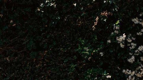 Zara inyecta juventud a tu look con este pantalón capri de lunares y flores