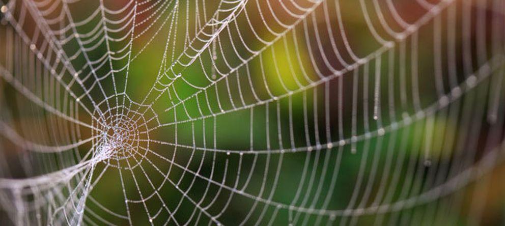 Foto: Arañas, medusas... la tecnología más puntera toma a la naturaleza como modelo