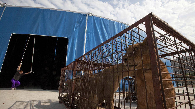 Carmena prohíbe la instalación de circos con animales en la ciudad