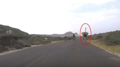Sorpresa en el asfalto: el avestruz que quería convertirse en ciclista profesional