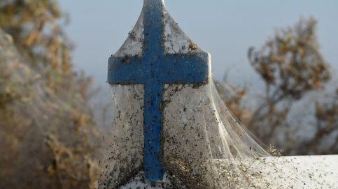 La increíble plaga de telas de araña que cubre Grecia