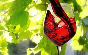 Los catorce (más uno) vinos de 2014