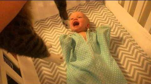 El amor incondicional de un bebé por su gato