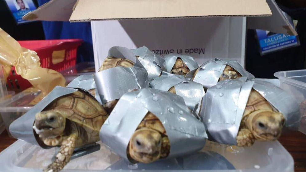 Foto: Cada tortuga estaba envuelta en cinta americana (Foto: Facebook)