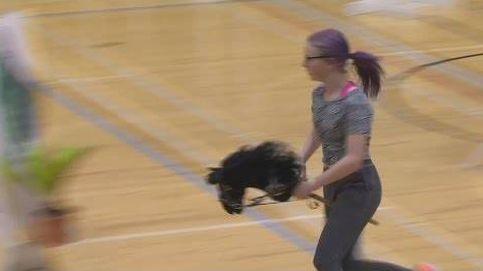 'Hobby horsing', el deporte que triunfa entre niñas finlandesas