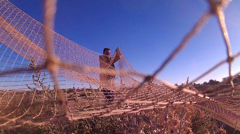Una de las redes en forma de libre permitidas para capturar estas aves