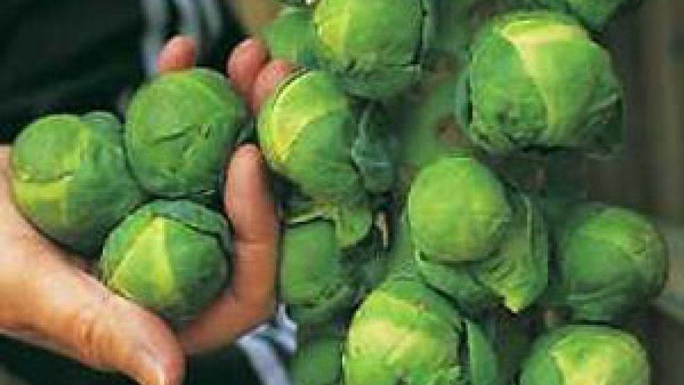 La colifror, la col de Bruselas y el brócoli podrían ayudar a los fumadores a prevenir el cáncer de pulmón