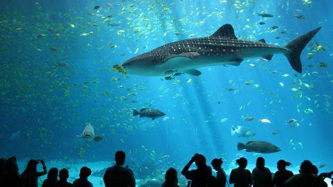De Valencia a Atlanta: estos son los acuarios más grandes del planeta