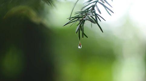 Vídeo: El agua en las hojas, los árboles y el sonido de lluvia