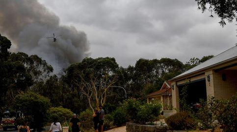 Un perro salva a cientos de animales de morir en los incendios de Australia