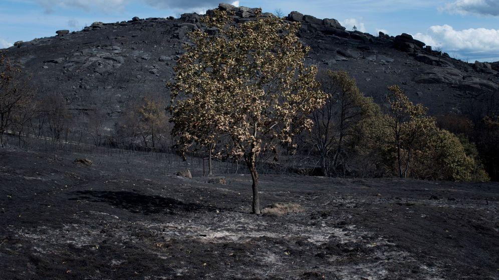 Foto: Vista de la superficie calcinada en el incendio forestal de Cualedro (Ourense). (EFE)