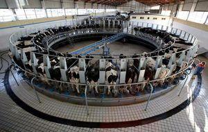 No es lo que parece: así se produce, se vende y se consume la leche