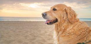 Post de Playas para perros en España: consulta las costas a las que pueden ir