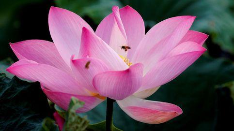 Temporada de flor de loto en Vietnam y lluvias monzónicas en Nepal: el día en fotos