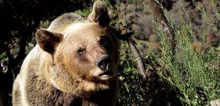 Post de Un hombre sobrevive un mes en la cueva de un oso: la última mentira que es viral