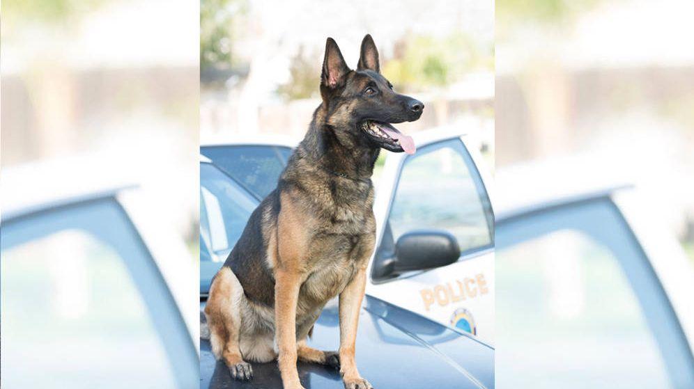 Foto: Ozzy murió debido al calor que hacía en el interior de su coche (Foto: Long Beach Police Department)