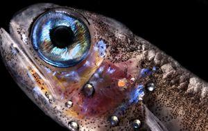 A partir de los 200 metros hay diez veces más peces de lo que creíamos