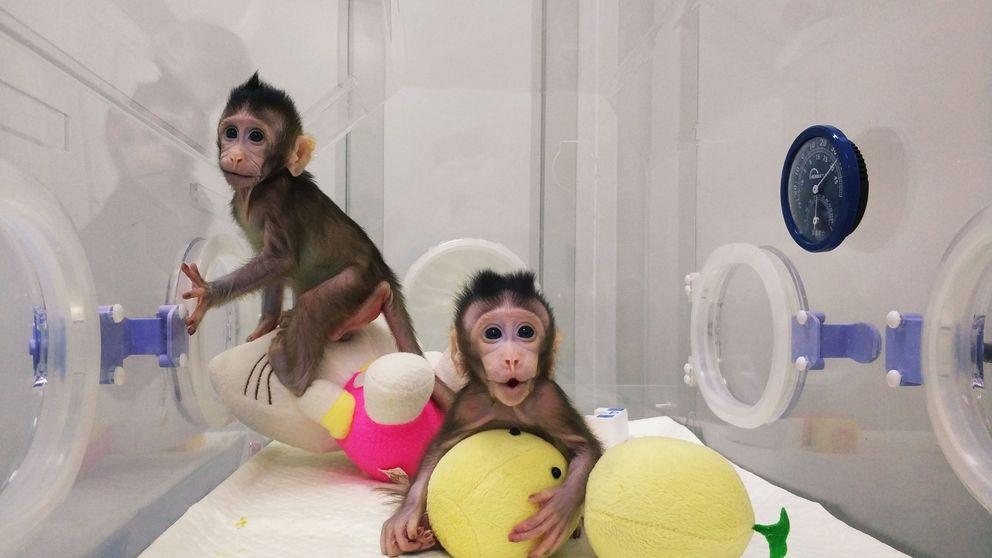 Historia de los clones: monos, cerdos, coyotes y perros