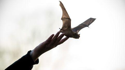 La importancia de respetar y conservar los murciélagos