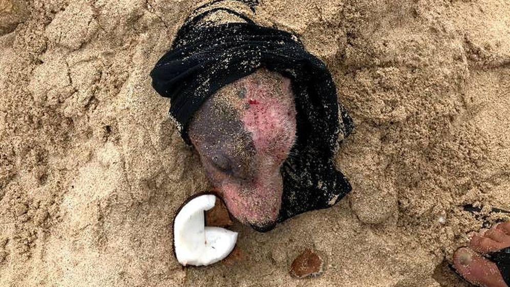 Foto: Así encontraron a Leialoha enterrada en la playa y sin apenas restos de piel (Foto: Facebook PAWS Hawaii)
