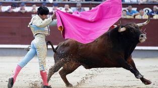 Toros de la Feria de San Isidro: para raza, la de Cayetano y Manzanares
