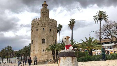 Pipper, el perro viajero que ha dado la vuelta a España
