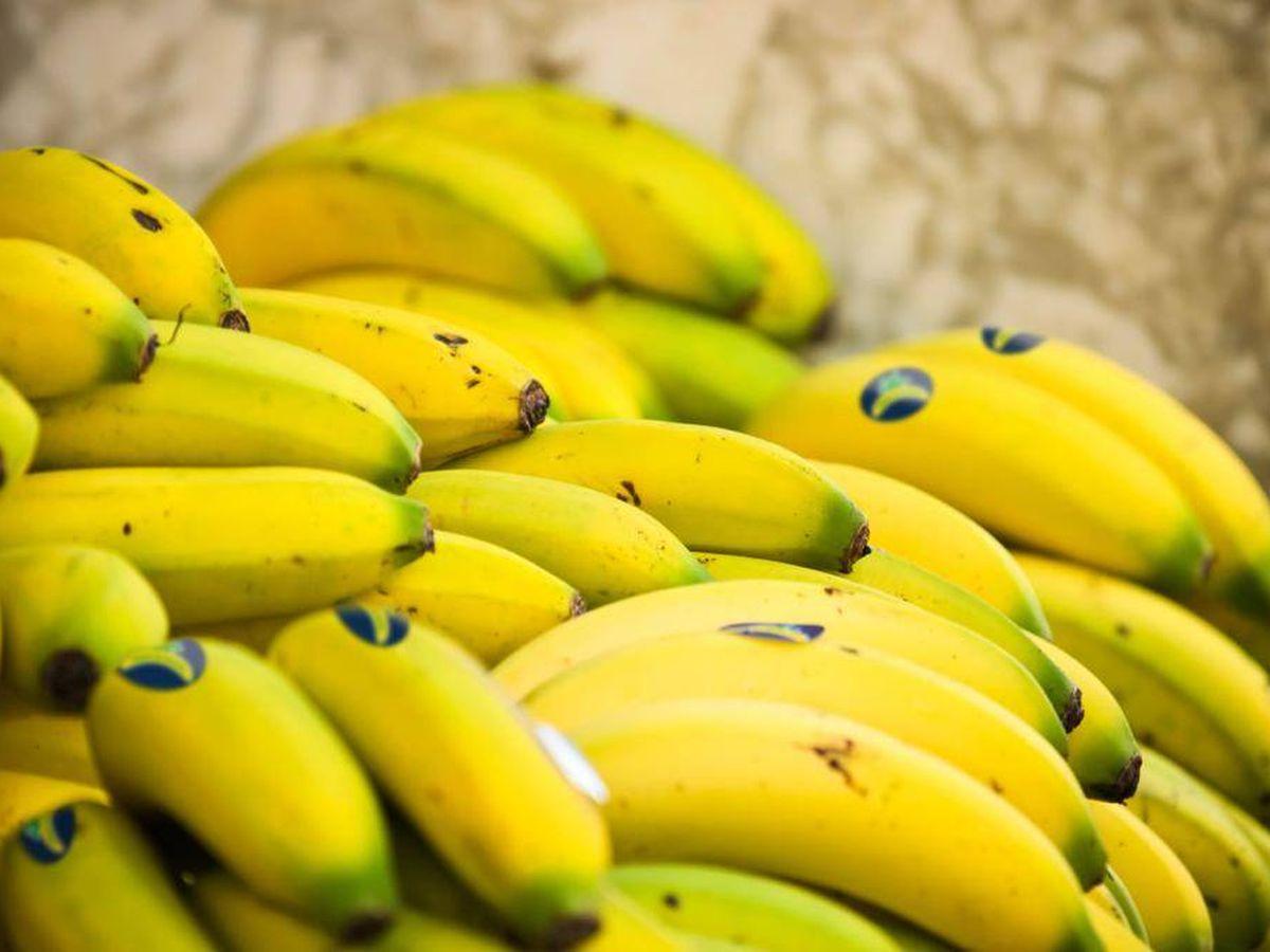 Foto: Plátanos de Canarias.