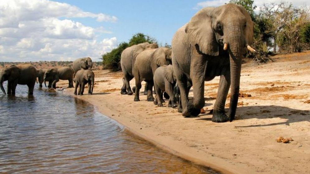 Foto: ¿Qué mató a 350 elefantes en Botsuana? Los científicos lanzan las primeras hipótesis. (Turismo de Botsuana)