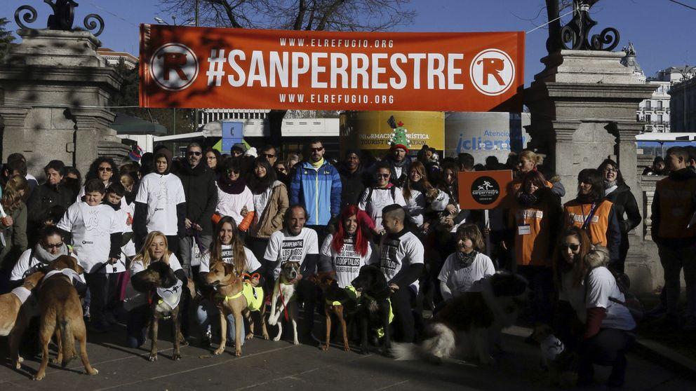 El PP se compromete a impulsar el 'sacrificio cero' de mascotas abandonadas
