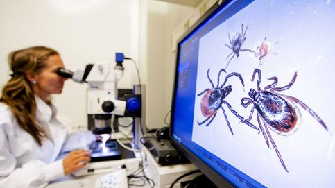 Un virus emergente llega a España: la fiebre hemorrágica que transmiten las garrapatas