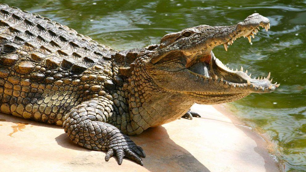 Una mujer indonesia termina devorada por el cocodrilo que tenía como mascota