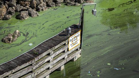 El alto valor, económico y ecológico, de unos lagos saludables