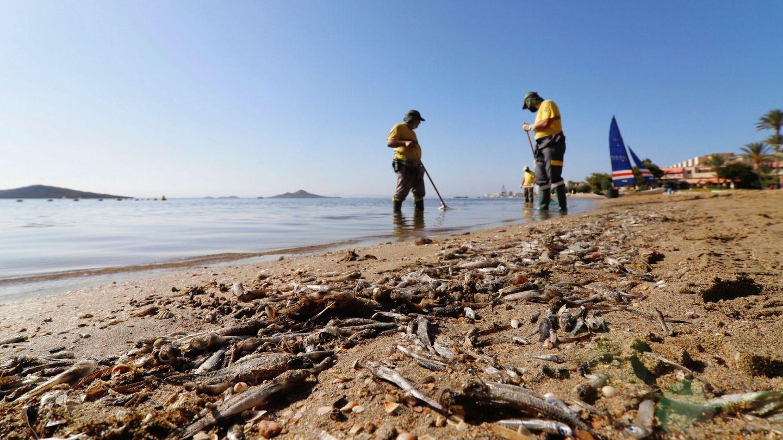 Operarios retiran los peces muertos de las playas del Mar Menor (EFE)