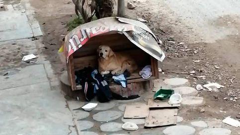 Los vecinos de un perro abandonado por su dueño le construyen una caseta