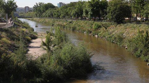 Carmena vuelve a convertir 1,5 km de Madrid Río en un canal para 40 remeros