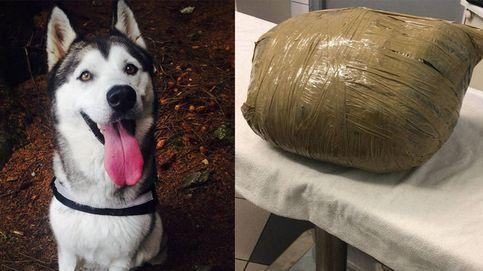 Llevó a su perra a una guardería en Irlanda y se la devolvieron muerta y en un paquete