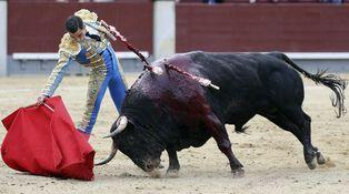 Toros de la Feria de San Isidro: el mentiroso (Salinero) y el cojo (Paco Ureña)
