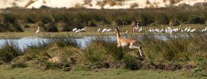 Foto: El ocaso de Doñana