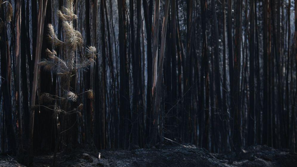 Foto: Árboles calcinados en el incendio de Pedrógão Grande (Portugal). (EFE)