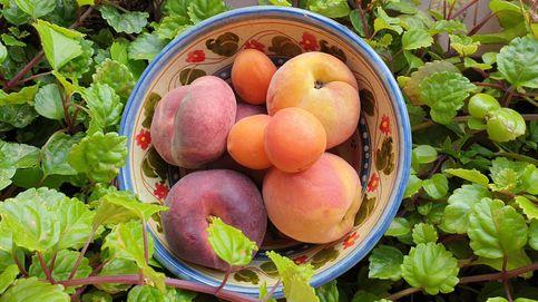 Melocotón, albaricoque y nectarina: ¿un debate a tres bandas de la misma fruta?