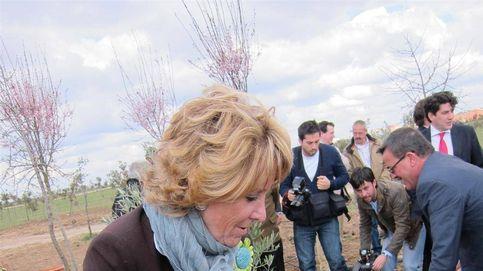 ¿Plantó Aguirre 15 millones de árboles? Murió hasta el alcornoque que ella puso