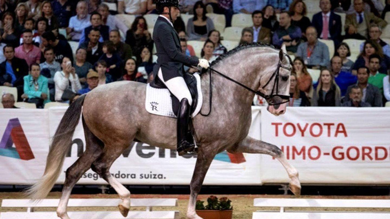 Yucatán, el caballo propiedad de Sergio Ramos, en una imagen de archivo. (EFE)