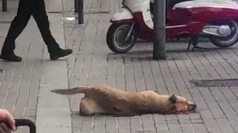 El disparo que mató a la perra Sota fue una medida defensiva y proporcional