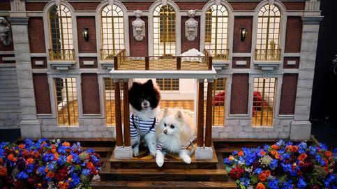 Feria internacional de mascotas en Tokio y Semana Santa en Sevilla: el día en fotos
