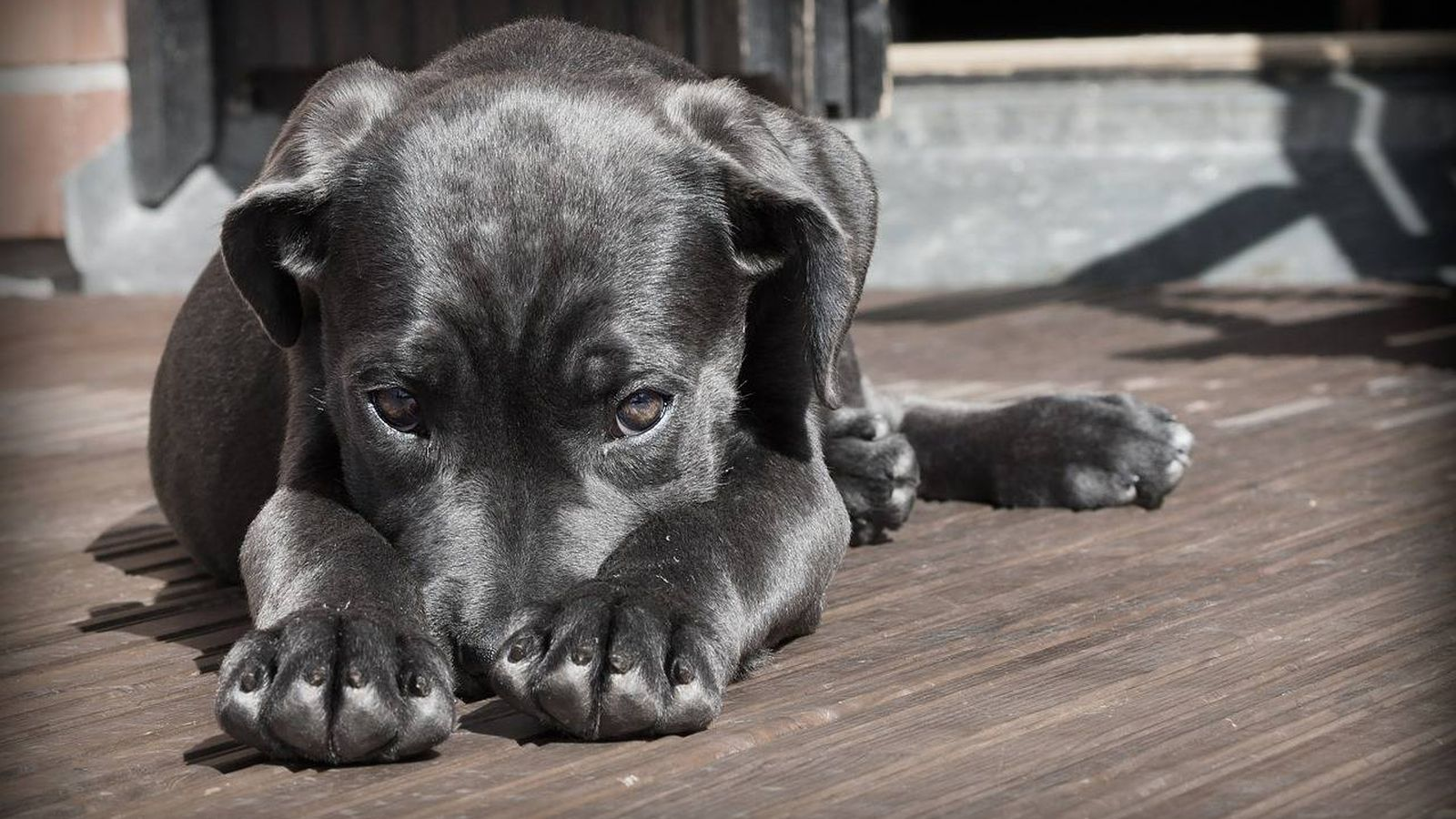 Foto: Perro tumbado (Pixabay)