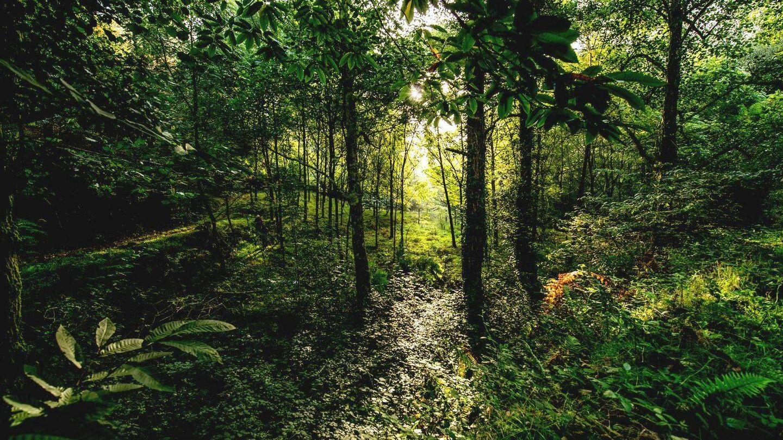 El estudio pone en valor los servicios que nos prestan los bosques variados. (Javier Lobón)